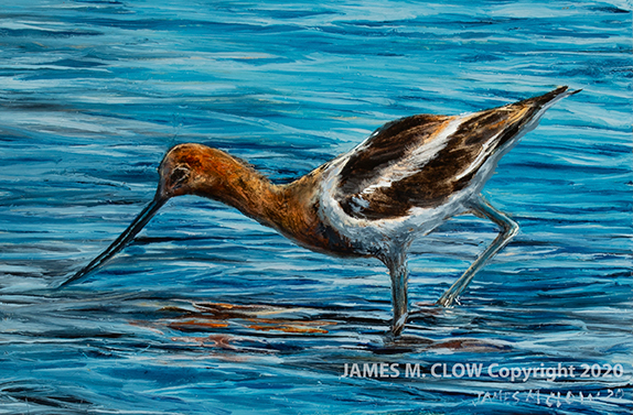 Avocet_cp_cr_web